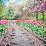 Urządzamy ogród i przestrzeń wokół domu. Na co warto zwrócić uwagę?