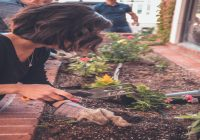 Najlepsze sposoby na ochronę roślin ogrodowych przed chwastami i szkodnikami. Poznaj je wszystkie